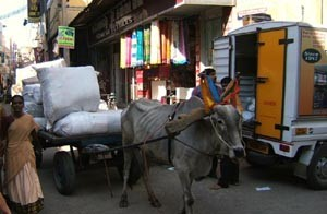 Bullock cart delivering goods.
