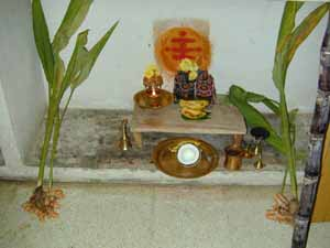 A family shrine to celebrate Pongal harvest festival, with turmeric, coconut, bananas and sugar cane.