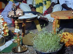Symbolism is an important part of a Hindu marriage ceremony. The growing seeds represent fertility.